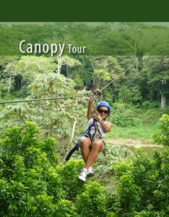 Half Day Canopy Tour
