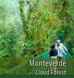 Monteverde Cloud Forest